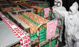 ['살충제 계란' 파동] '계란 이력제' 의무화 안돼…외식업계도 메뉴 넣었다 뺐다 '혼선'