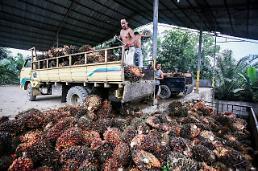 인도네시아 팜 오일 산업 위기… 미국 반덤핑 관세·EU 환경문제 퇴출 움직임