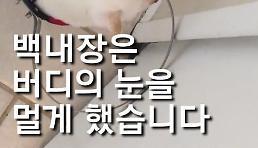 [영상딱] 시각장애 반려견에게 주인이 보인 행동은?