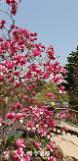 [아주동영상]700종 목련이 활짝 천리포수목원으로 봄나들이 떠나요~