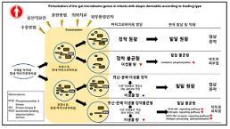 국내 연구팀, 장 내 미생물-아토피 상관관계 밝혀