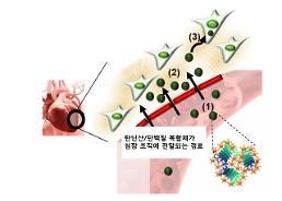 KAIST, 와인 성분으로 심장에 약물 보내는 기술 개발