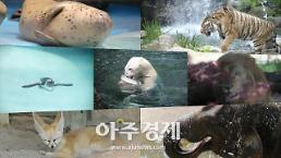 [광화문갤러리] 폭염에 지친 동물들이 여름을 보내는 방법