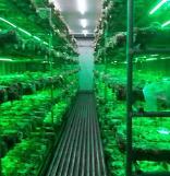 (주)액스트림팜, 버섯으로 연간 13억 매출