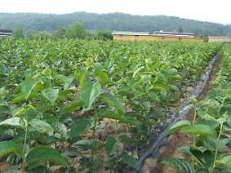 인천시 ,수목 양묘 생산공급 개선