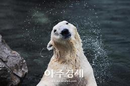 국내 유일 북극곰 통키, 올해 말 영국으로 떠난다