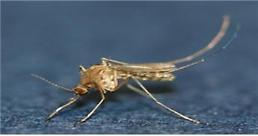일본뇌염 환자 국내 첫 발생…10월 말까지 모기 주의해야