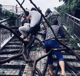 [중국포토] 괴물 태풍 망쿳 계단 아닌 나무에 올라 출근하는 선전 시민들