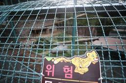 대전동물원 퓨마 탈출 결국 사살… 주민 안전 위험에도 끝까지 생포하려 했던 이유는?