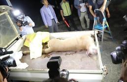 대전오월드 퓨마 결국 사살, 동물 복지전문가 동물원 폐쇄한 국가 없다