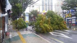 [태풍 콩레이]가로수 쓰러지고, 도로는 아수라장…부산 피해 속출