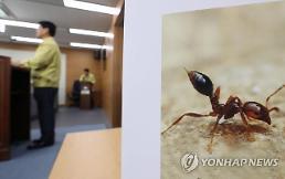 부산·인천·대구 이어 안산에서도 붉은불개미 발견…쏘이면 어떻게?