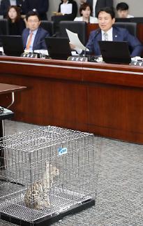 동물단체 김진태, 벵갈 고양이 어디서 어떻게 보호할지 밝혀라