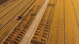 재배면적 감소‧기상악화로 올해 쌀 생산량 2.4% 줄어