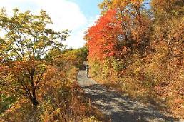 가을 단풍 절정, 해발 1100m 하늘길 운탄고도