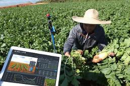 KT-농정원, AI 기반 노지채소 스마트팜 구축 나서