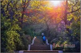 [중국포토] 쾌청한 가을날 도심 북적…칭다오 단풍놀이 명소 1위는?