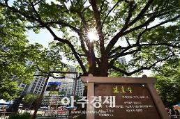 [수원시] 영통 단오어린이공원 느티나무 복원 회의 개최