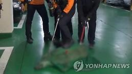 서울 강동구 일대에 멧돼지 출몰…굶주림이 원인?