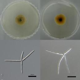 수생균류 전체유전체 염기서열 세계 최초 해독