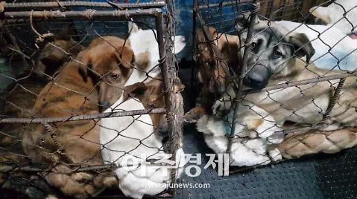 경기도 특사경 동물 학대행위 강력 처벌...집중 기획수사