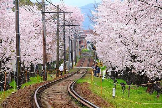 일본 지역별 벚꽃 개화시기는?