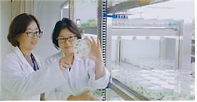 [미래의 농어촌] 10년 전 수입종 프리지어, 이제 꽃색ㆍ모양까지 국산 개발