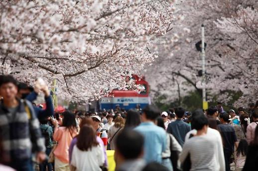 진해군항제, 태안세계튤립축제 등 4월엔 전국이 꽃 축제장으로 변한다.