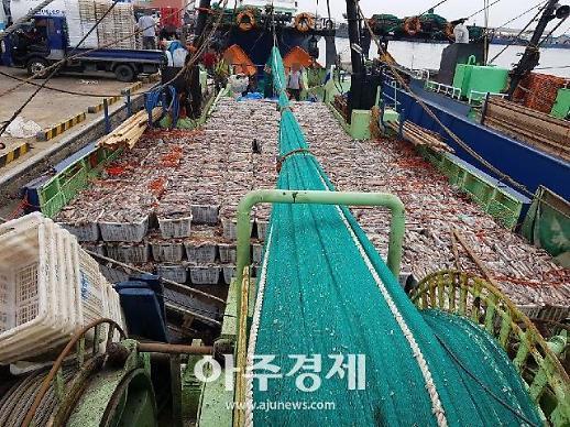 포항해경, 불법 싹쓸이 조업…오징어 15억원어치 잡은 일당 검거