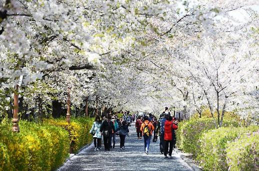 완연한 봄날… 동대문구, 봄꽃축제 발길 모은다
