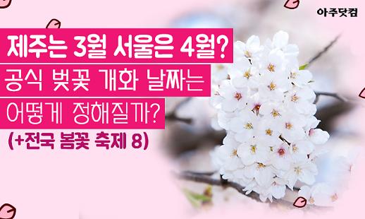 제주는 3월, 서울은 4월? 공식 벚꽃 개화 날짜는 어떻게 정해질까?[카드뉴스]