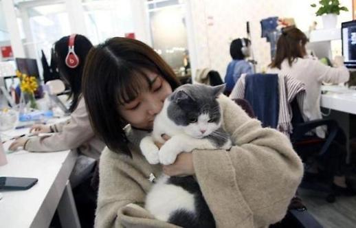 반려동물과 동반 출근 중국기업의 특별한 사내복지