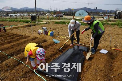 성남시 도심 속 텃밭 가꿔요...시민농원 개장