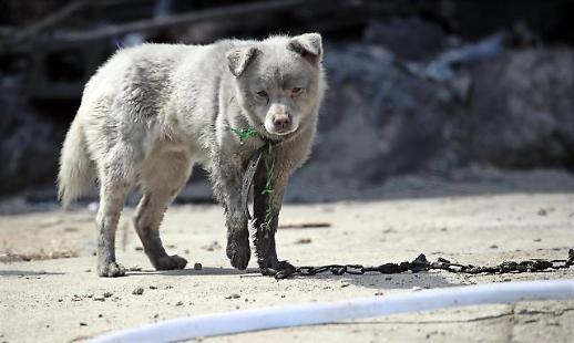 화마에 그을린 강아지·폐허 속 송아지…속초 산불에 동물들 어쩌나