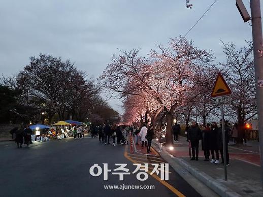 2019 영등포 여의도봄꽃축제, 1.7km 구간에 1886주 왕벚나무서 벚꽃들 만발..다채로운 문화예술 프로그램
