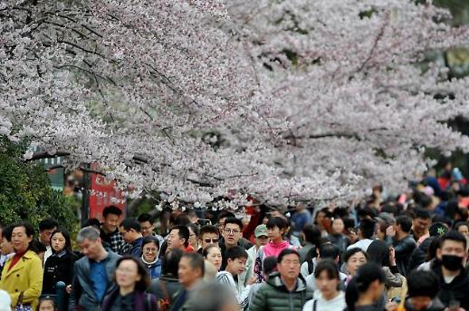 [중국 포토]칭다오에 찾아온 봄... 벚꽃 축제 즐기는 나들이객