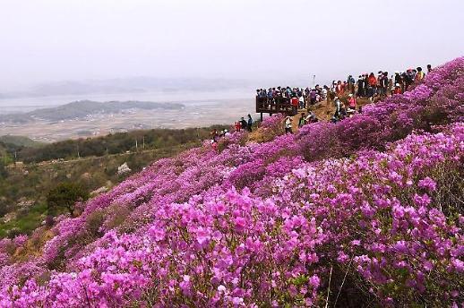 [특집]인천의  봄꽃 명소
