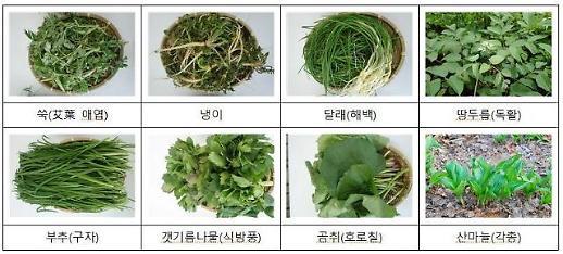 꾸벅꾸벅 나른한 봄, 쑥·미나리·두릅으로 춘곤증 극복
