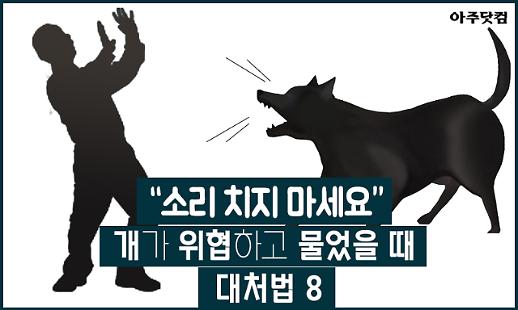 소리 치지 마세요! 개가 위협하거나 물었을 때 대처법 8 [카드뉴스]