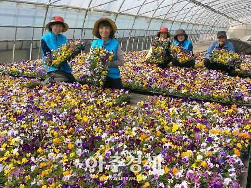포천시농업기술센터 화훼기술 정립 실증재배용 꽃묘 분양