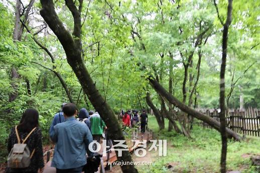 [남양주] 김한정 의원, 걷고싶은 광릉숲길 조성…25일 개통