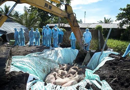 베트남서 돼지열병 지속 확산…63개 지역 중 59곳서 발생