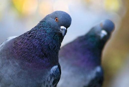 집비둘기는 걸어다니는데, 참새는 왜 통통 뛰어다닐까요?