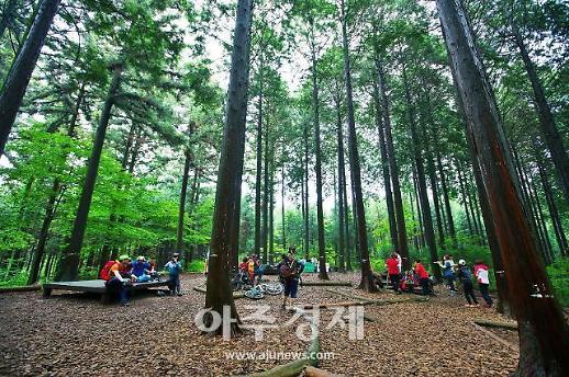 장성 축령산 편백숲 올여름 피서지 추천