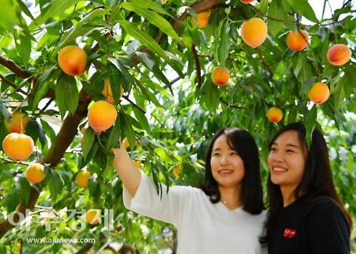 '인구감소지역 지원사업'에 정선·홍성·순창·영암·청도 선정