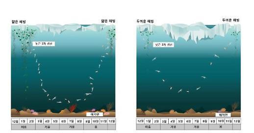 극지연, 이상기후 현상과 남극 동물플랑크톤의 행동 간 연관성 규명