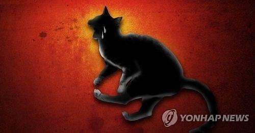 '구속영장 기각' 경의선 숲길 고양이 살해 男… 누리꾼 잠재적 살인자