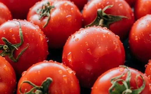 토마토, 과일? 야채? 1893년 미국 대법원 덩굴식물이므로…