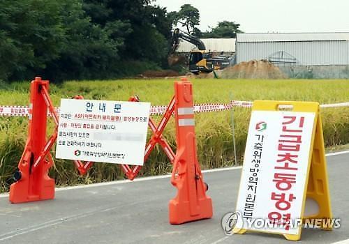 인천 강화군 돼지 3만8천만마리 모두 살처분한다