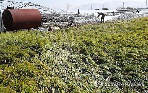 (농식품부-아주경제 공동기획) 1년 농사 한 번에 와르르…재해보험 대폭 강화